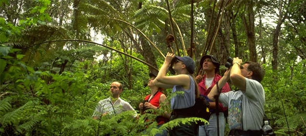 birdwatching-safari