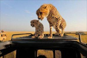 6 day safaris