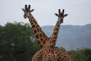 8days safari - northern Tanzania