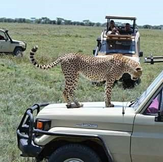 Seven Days Safari