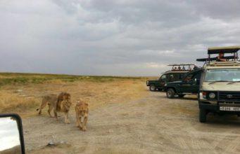 10 days tanzania safari