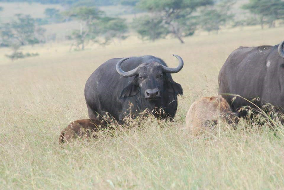 5 days safari - tanzania