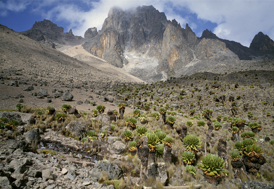 mt-kenya_lobelia_valley