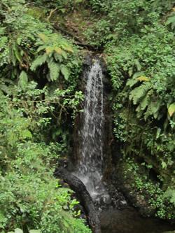 Marangu Day Hike