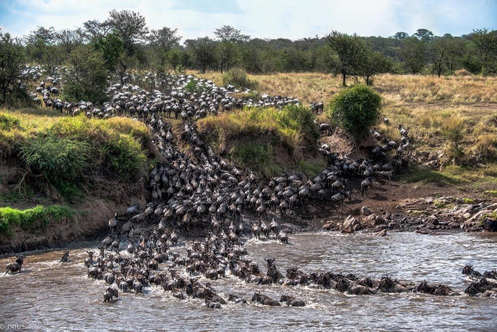 Migration Safari – July to September